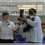 Int. Katzenshow in der Eissporthalle in Solingen (05.09.2010)