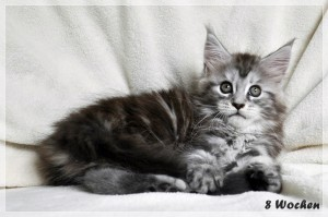 Sophie 8w (7)