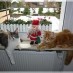 Charlie und Marcie im Weihnachtsstress
