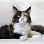 Freya 10m (12)