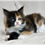 Freya 7w (14)