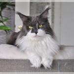 Bijou Apr18 (3)