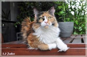 Rosalee 2,3 Jahre (14)