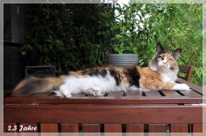 Rosalee 2,3 Jahre (15)