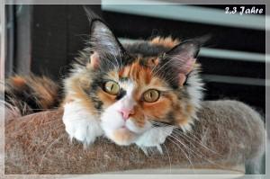 Rosalee 2,3 Jahre (3)