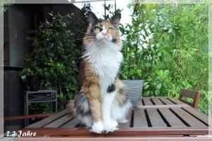 Rosalee 2,3 Jahre (6)
